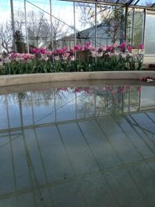 vand i drivhus1