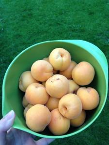 Abrikoser i skål
