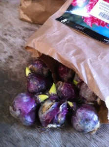 hyacint5