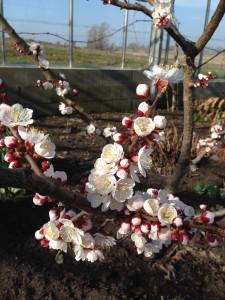Flere blomster15