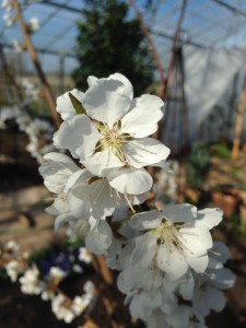 Flere blomster4