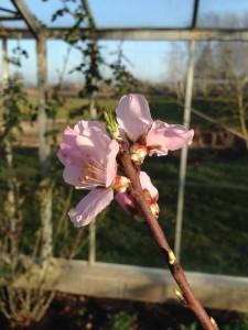 Flere blomster9