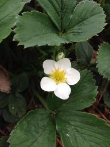 Blomsterboom3