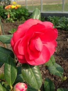 Blomsterboom4