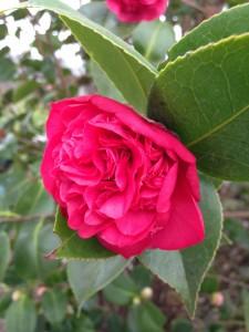 Blomsterboom6