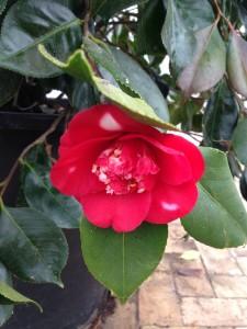 Blomsterboom8