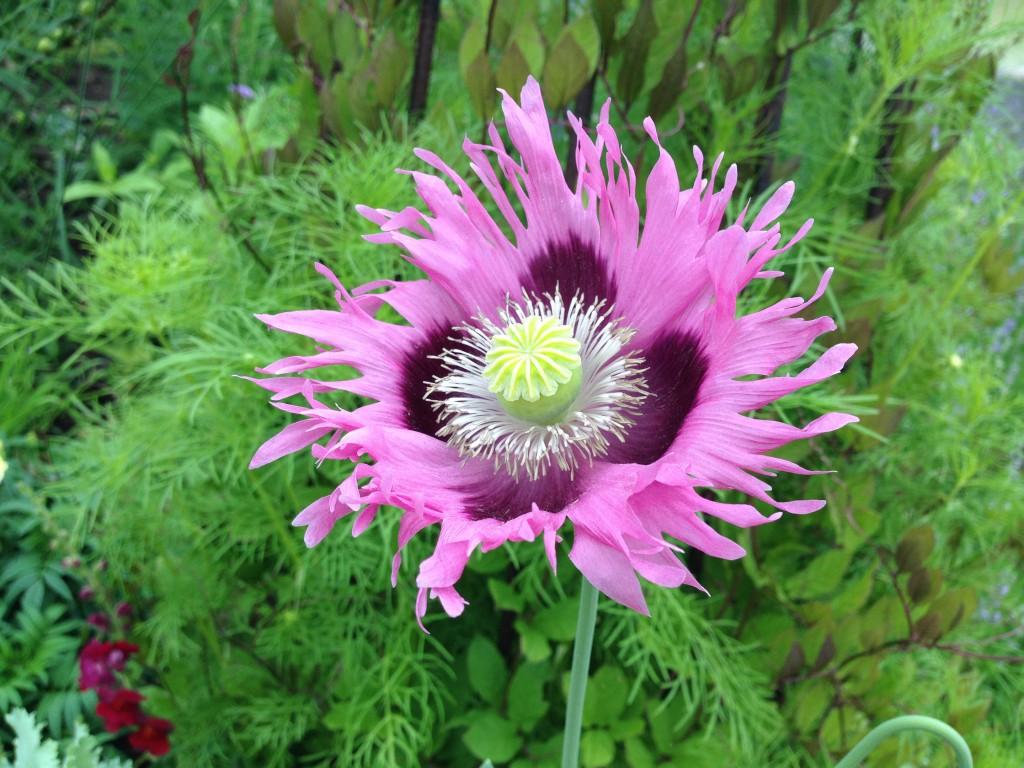 Smukke blomster 10
