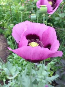 Smukke blomster 9