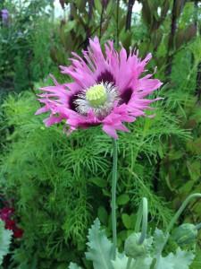 Smukke blomster1