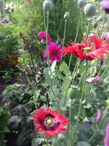 Smukke blomster4