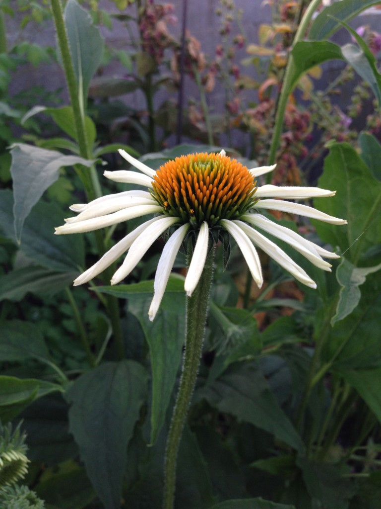 Smukke blomster5