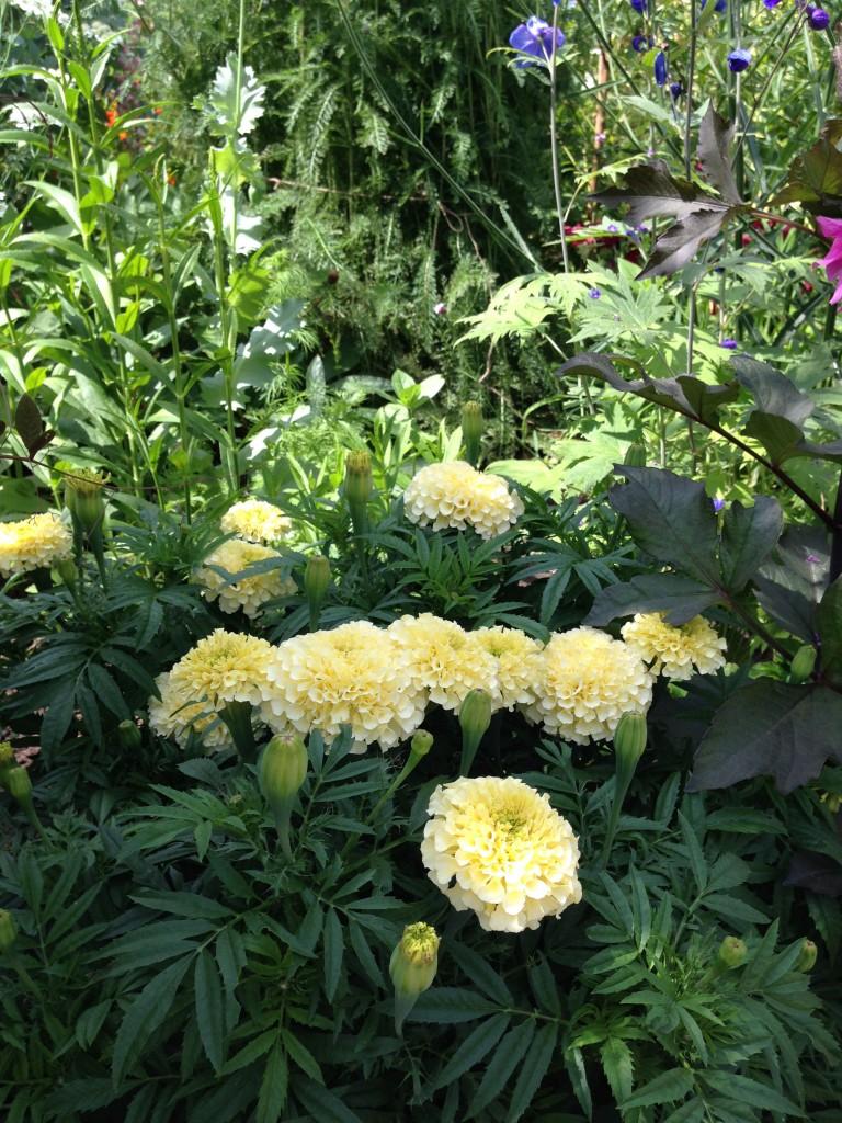 Smukke blomster6
