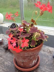 nye planter2