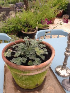 nye planter3