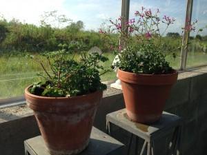 nye planter6