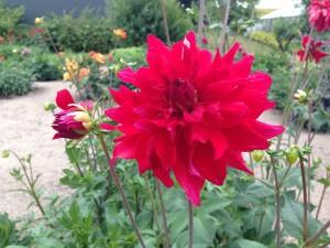 flere blomster 1
