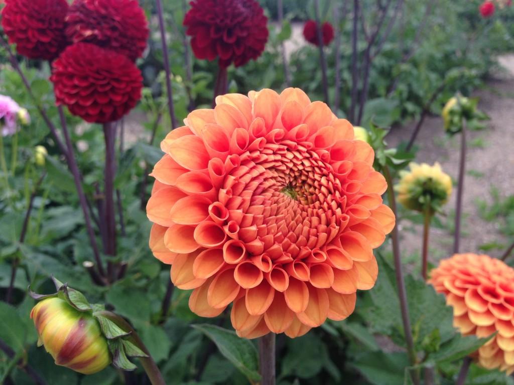 flere blomster 10