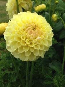 flere blomster 4