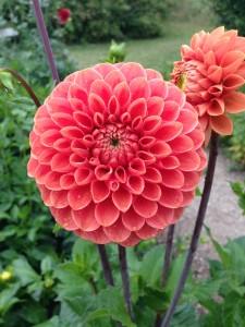 flere blomster 5