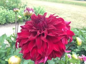 flere blomster 8