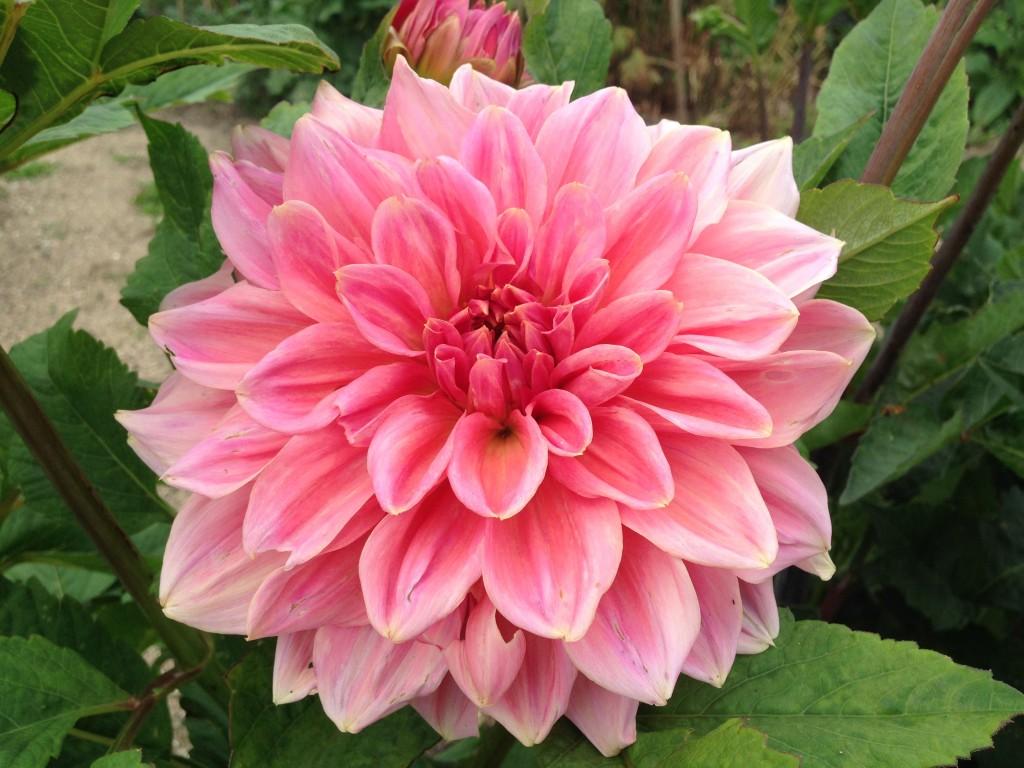flere blomster 9