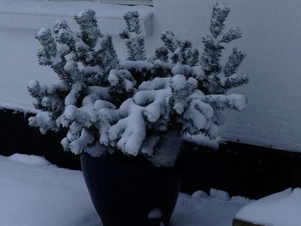 vinter 2015 4