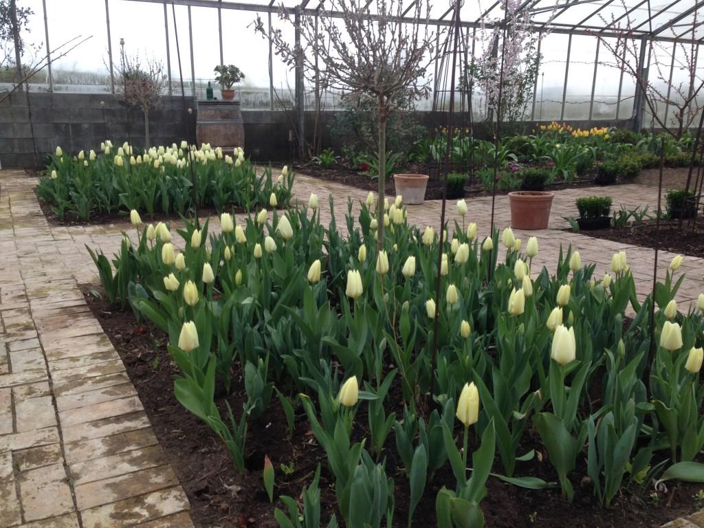 tulipaner 2
