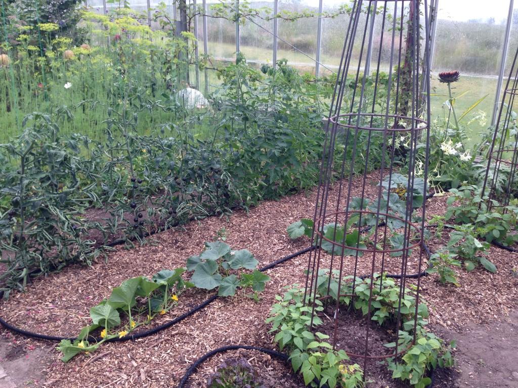 Grønt i drivhuset 8