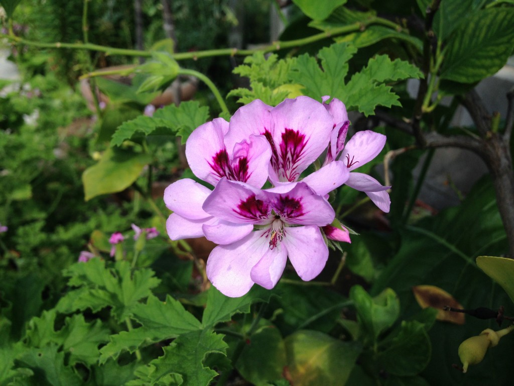 eksotiske blomster 5