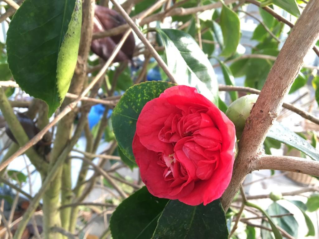 flot blomst 2