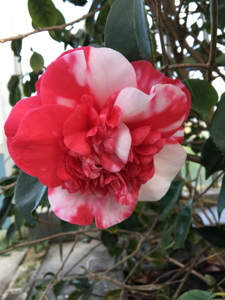 flot blomst 7