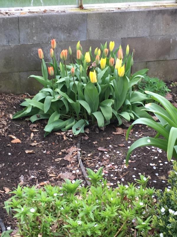 dejlige blomster 2
