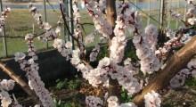 dejlige blomster 3