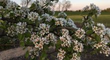blomsterflor 3